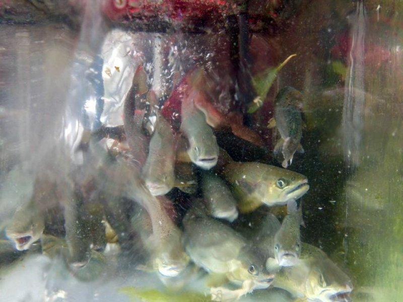 Kametani live and fresh fish nara japan travel japan for Fresh fish online