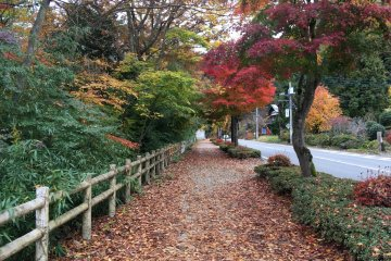 <p>Some roadside path was also very scenic.</p>
