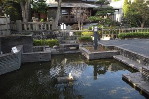 The pond in front of the teahouse