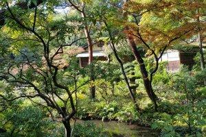 나뭇잎 사이로 언뜻 보이는 다실.