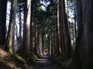 The tranquil pathway to the shrine, under the shades of centuries old cedar trees.