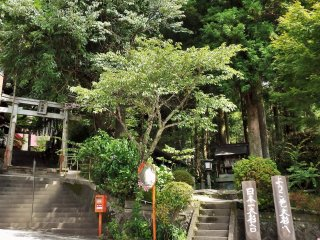 From the street, the trees are (mostly) hidden within the forest surrounding the shrine.