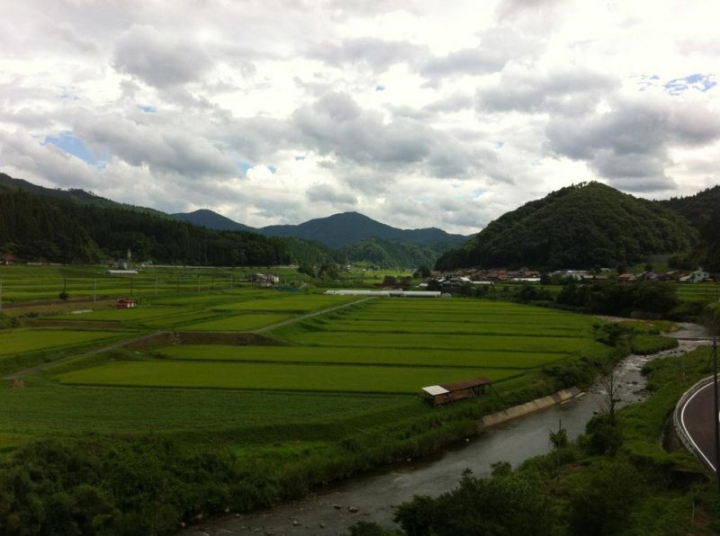 looking over rice fields