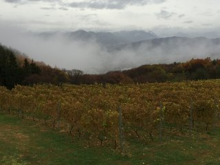 Foggy valley in the distance as we looked out over the vines