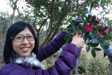 <p>This is for theHerbal Water Making workshop. I spotted this wild Camellia &nbsp;tree along the way and snipped some flowers to add some sweet scent to our water.</p>