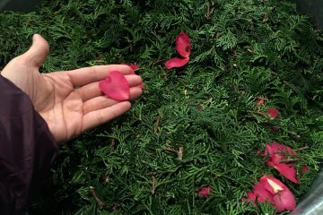 <p>We also collected fir leaves, cypress leaves and bamboo shoots . Everything needs to be cut into smaller pieces for the machine to digest</p>