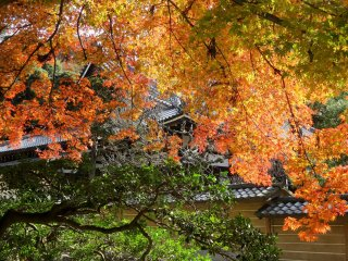 A branch of colorful maples hides the roof of the main hal