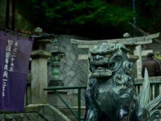 Một chú chó sư tử bảo vệ một cách đầy cảm hứng Nhật Bản