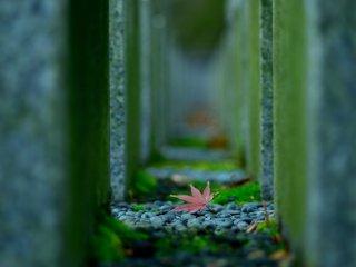Một chiếc lá rơi trong sân đền