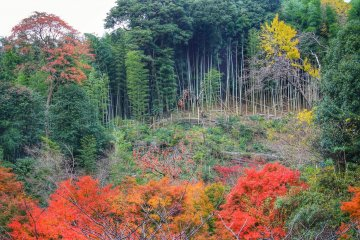 The view from Nanzo-in: a bamboo forest, a persimmon tree and beautiful autumn colors