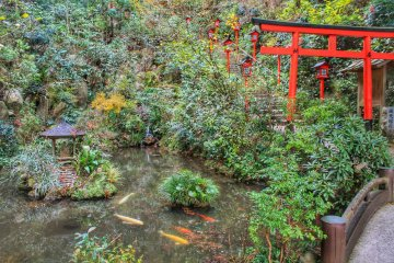 One of the many beauiful details: a pond with carp and a red torii (wooden gate)