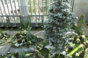 Pohon setinggi sepuluh meter ini merupakan pajangan utama di Pameran Bunga Natal.