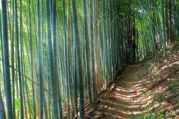 Пешая тропа сперва проведет вас через изумительный бамбуковый лес
