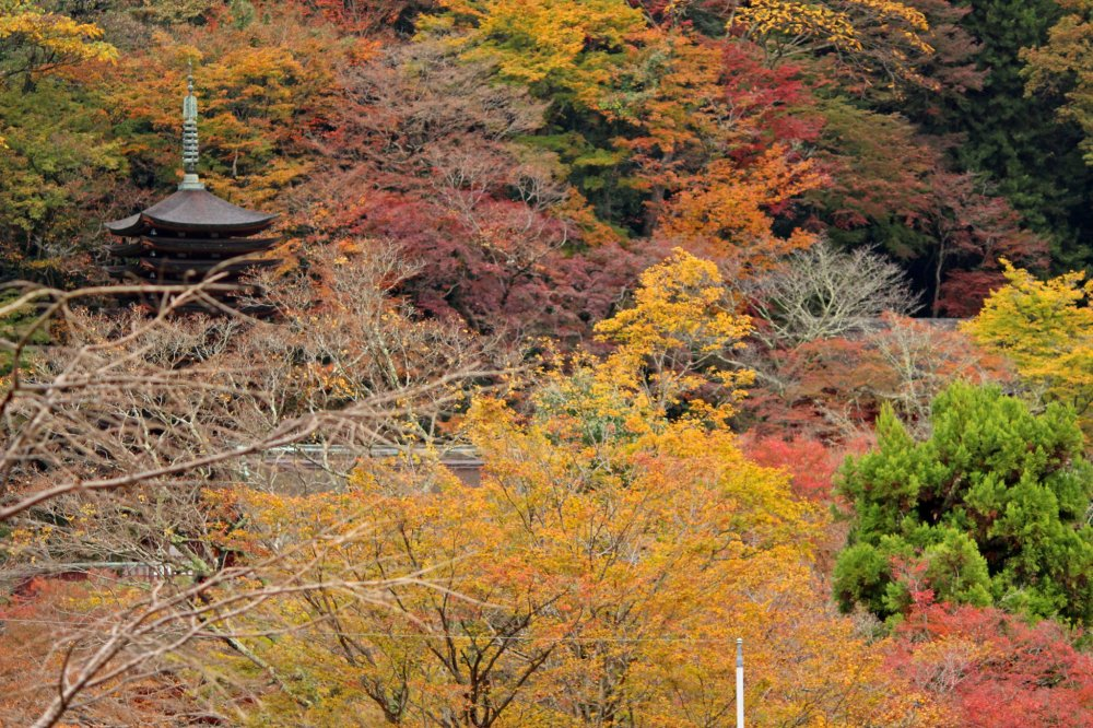 The pagoda and the foliage