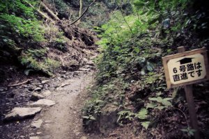 Trail 6 leading up the Biwatoki Creek.