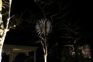 Fireworks behind a wilting tree.