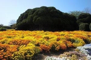 ทางเดินสวนดอกไม้ 2