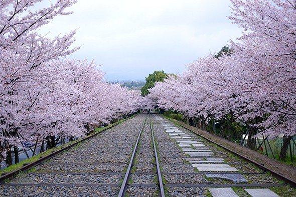 <p>ฮานามิดอกซากุระในเกียวโต</p>