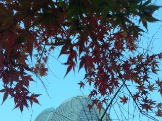 Roppongi Hills dan dedaunan maple