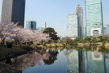 Vườn Kyu Shiba Rikyu vào mùa xuân