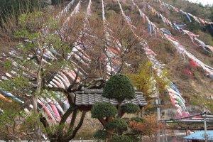 Koinobori di tepi Sungai Jinryu di Kanna