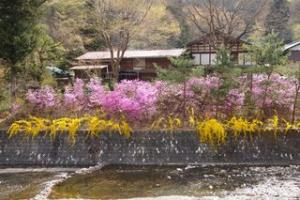 Bunga-bunga bermekaran di sepanjang sungai