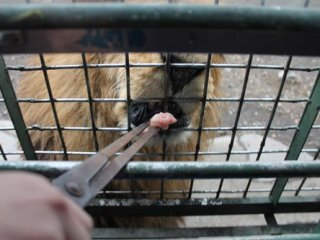 Tongs are used to feed the animals. Be careful not to let your children put their body parts out of the cage.