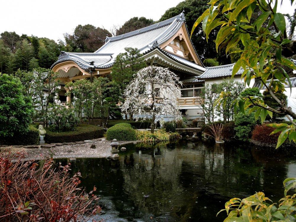 View across the koi pond