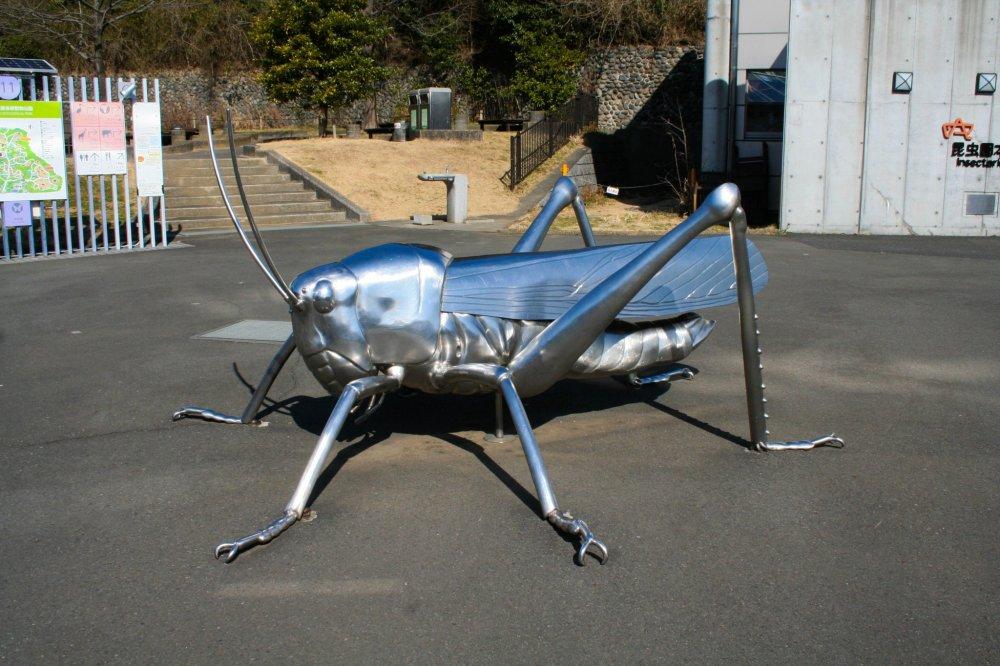 Le coin des insectes