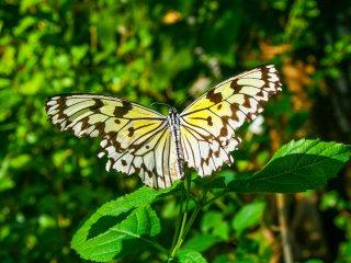 Un papillon du zoo de Tama