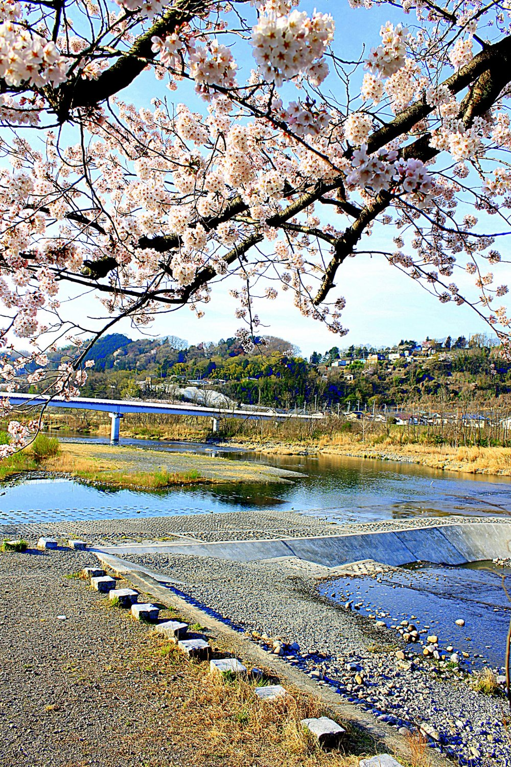 One spring morning by the Tama River, you can see the bridge from the kiosk near the Tamagawa Brothers' statue