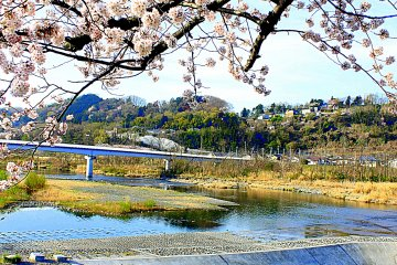 Spring Sakura Along the Tama River
