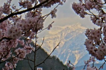 The northern most peak in the Southern Japanese Alps framed by sakura