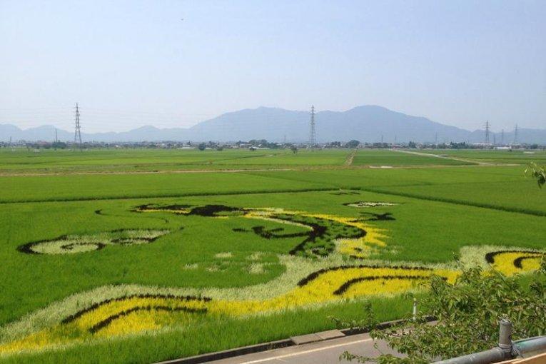 日本の穀倉地帯 新潟・越後平野
