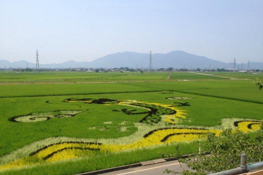 今年の干支が描かれた?!様々な米による稲作アート