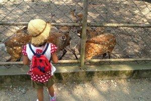 神社内にある鹿園。様々な鶏ケージもあった