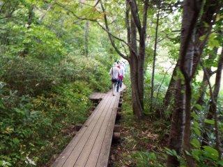 Trail around Otatomari Pond