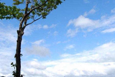 """Kumano–""""Vùng đất của các vị thần"""""""