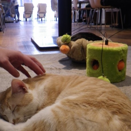 Cat Cafe Nekomiya, Utsunomiya