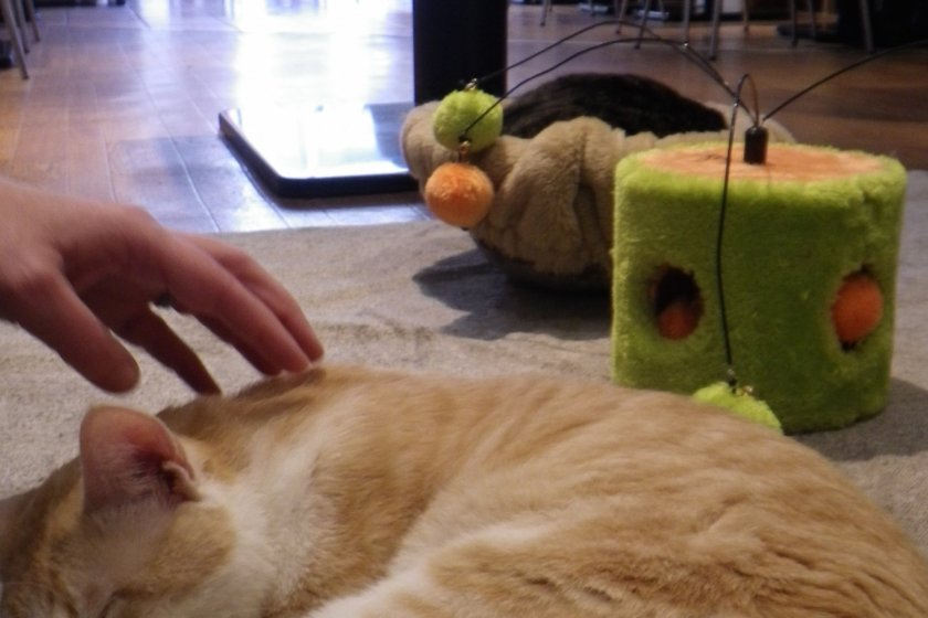 The cat toy corner is on a hot carpet at the back of the cafe. Patrons can roam around the cafe and photograph the cats, or pet or play with them