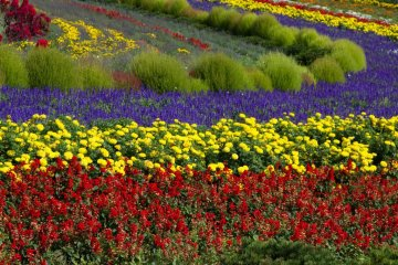 Perfectly aligned flowers