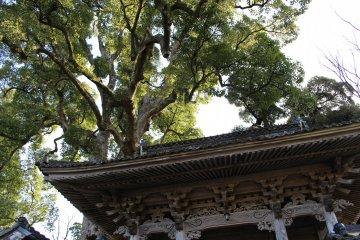 Outside Daijoji, Hyogo