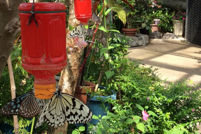 Fairyland - hundreds of butterflies live in the Butterfly Zone. Here, they are feeding on nectar. If you wear sweet perfume or hair products, they may be attracted to you. My friend told me that the first time she visited here, dozens of butterflies landed on her husband`s head