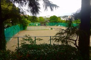 Tennis courts surrounded by big Himalayan cedars
