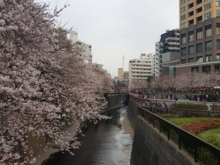 Near Nakameguro station