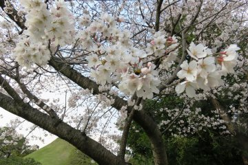 Celebrate the coming of spring with ancient readings and tea ceremonies
