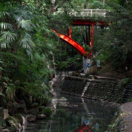 The Beauty of Todoroki Valley