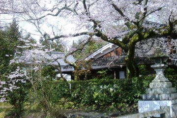 The cherry blossoms at Sannenzaka in Kyoto.