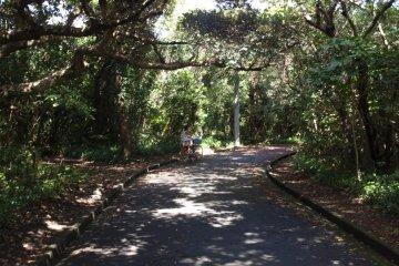 Easy riding, Shikine-jima by bike