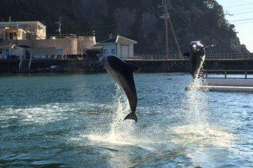 L'Aquarium Marin de Shimoda